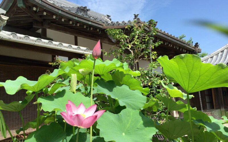 対談企画 #21 『来迎寺を紐解き、湯崎を探る – 来迎寺×アートの可能性 – 』